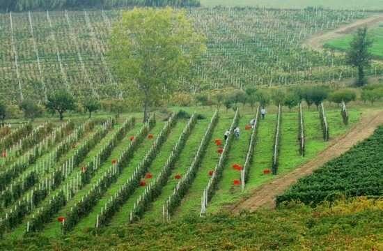 Vignale Monferrato