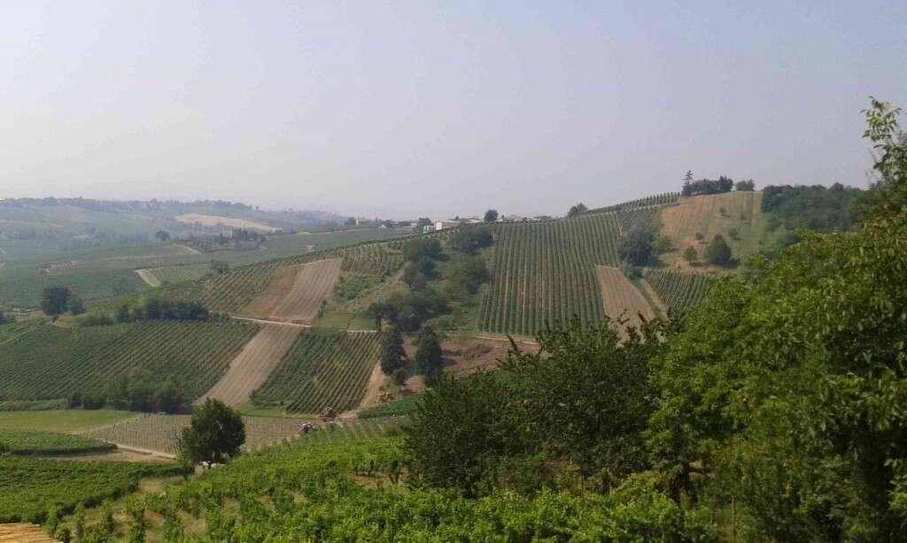 Panorama colline Oltrepò Pavese - Cantina Marco Vercesi