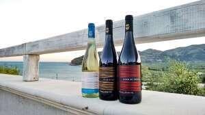 I vini di Cantine Losito Terre del Gargano