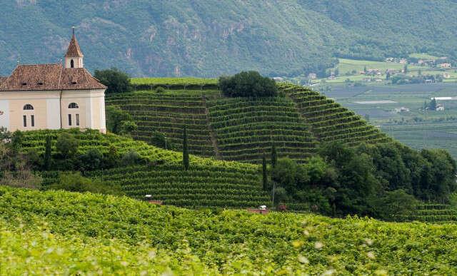 Il Sanctissimus: il Pinot Bianco secondo la Cantina San Paolo in Alto Adige