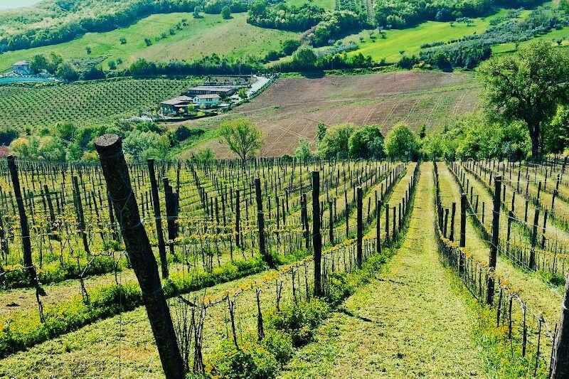 Le Vigne di Francesco Massetti in Abruzzo