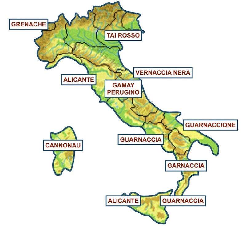 Diffusione del Vitigno Grenache Noir in Italia con i suoi tanti sinonimi