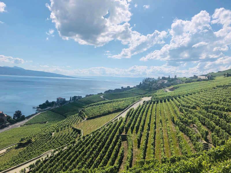 Panoramica Lago di Ginevra e Vigneti
