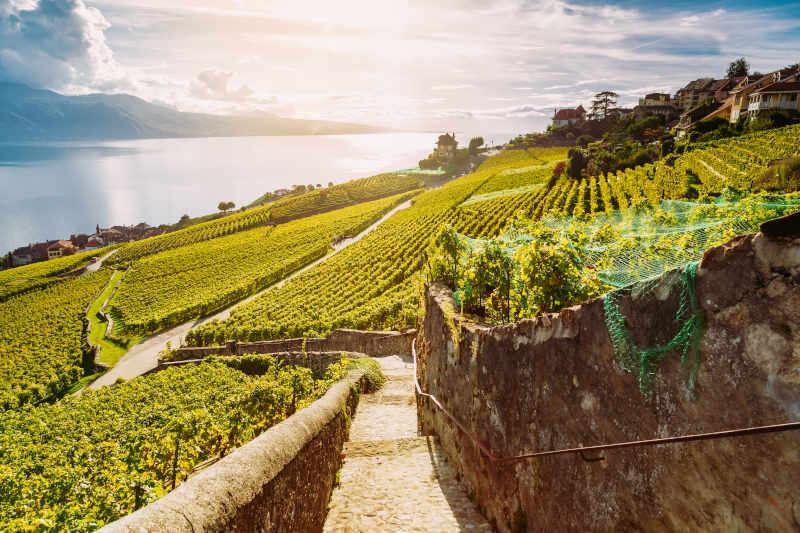 Sentiero escursionistico tra terrazze di vigneti con vista sul lago di Ginevra - Canton Vaud