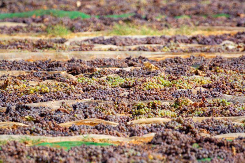 Essiccazione tradizionale delle uve Pedro Ximenez a Montilla-Moriles in Andalusia