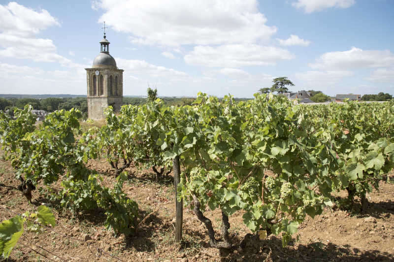 Chiesa di Notre Dame et Saint Jean Baptist circondata da vigneti sopra Vouvray nella Loira