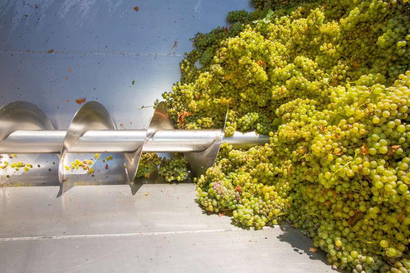 Diraspatrice e Vinificazione delle uve