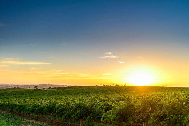 Barossa Valley Australia