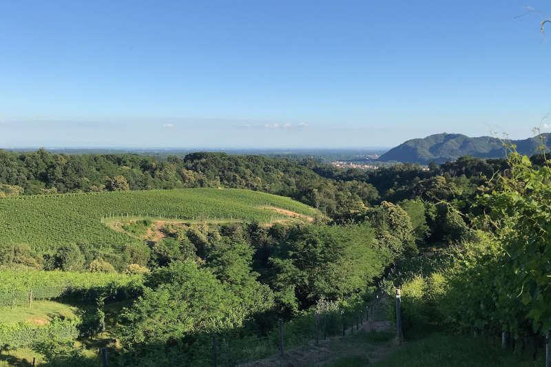 Panorama boschi e vigneti, in lontananza scorci di Gattinara e Colline Novaresi