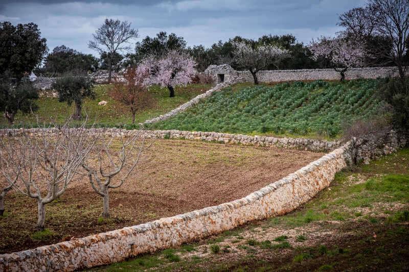 Tipici muri a secco costruiti a mano con pietra, patrimonio UNESCO Valle d'Itria