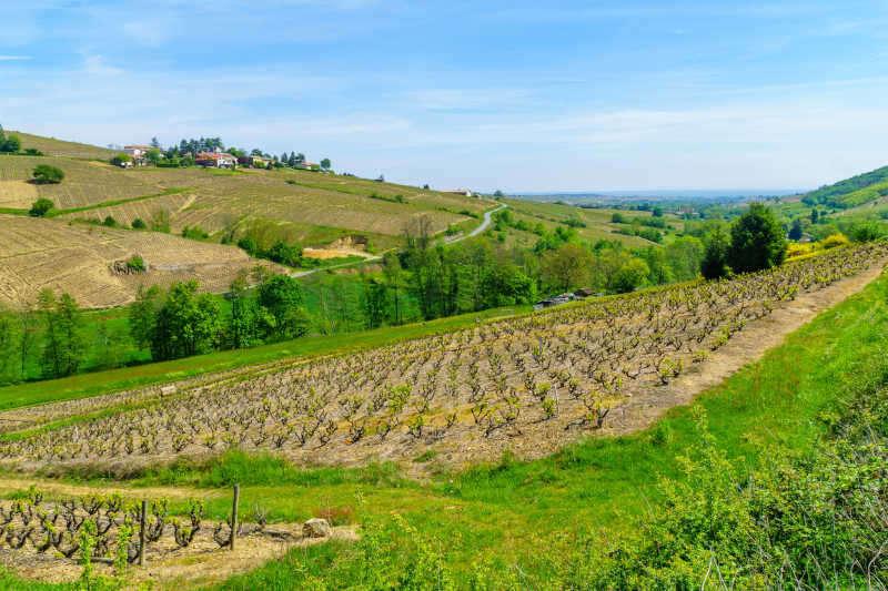 Paesaggio di vigneti e campagna nel Beaujolais
