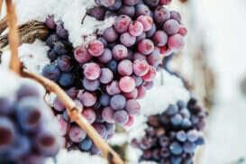 Ice Wine o Eiswein